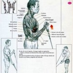 curl de biceps con polea