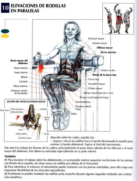 elevacion de rodillas en paralelas