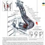 elevaciones de piernas en bacno inclinado