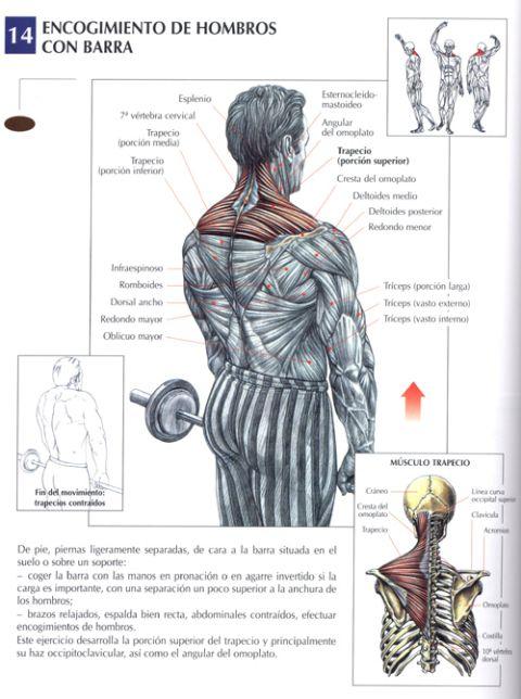 encogimiento de hombros con barra