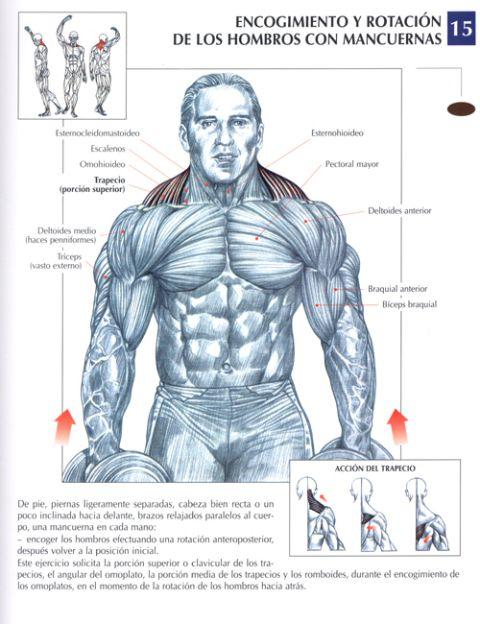 encogimiento y rotación de hombros con mancuernas