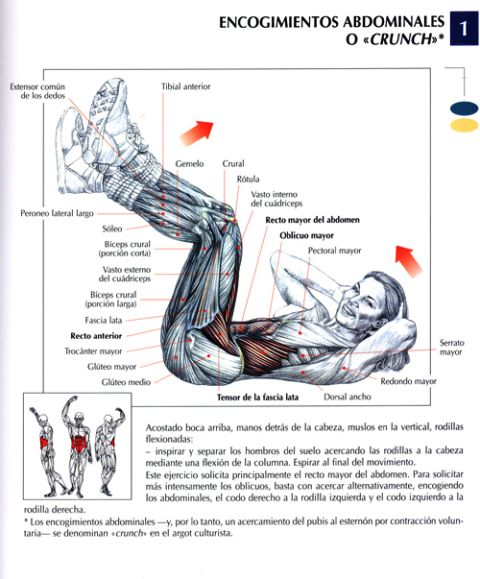 encogimientos abdominales o crunches