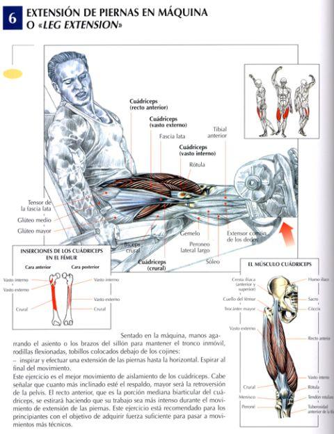 extension de piernas en máquina