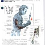 extensiones de triceps en supinación