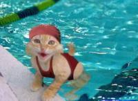 gato nadador