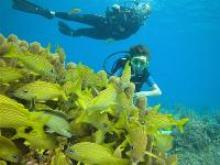 Submarinismo en verano