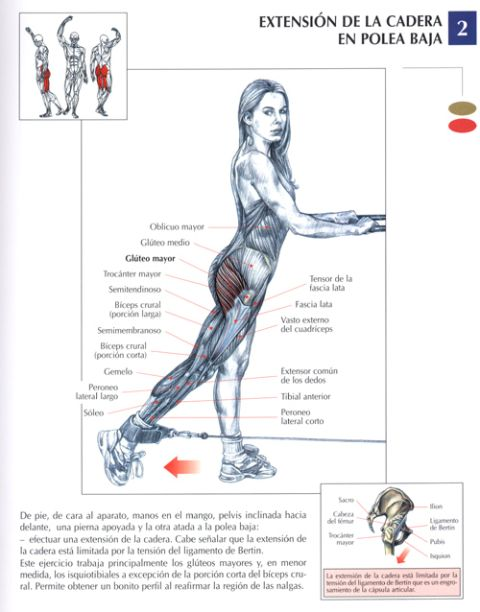 elevacion de la cadera en polea baja