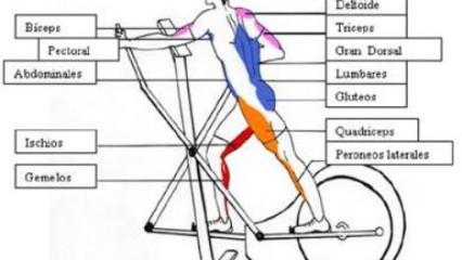La bicicleta elíptica