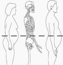 La obesidad abdominal incrementa el riesgo de muerte prematura 2