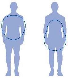 formas del cuerpo según el sexo y la distribución de la grasa corporal