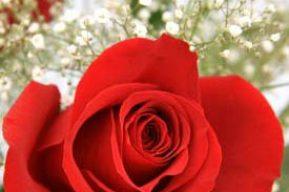 Regala flores porque sí