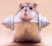 ratón cachas