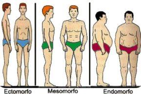 Biotipos, porqué el músculo se convierte en grasa