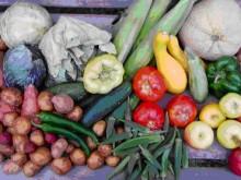 El Vegetarianismo 1