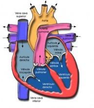 Práctica deportiva y reconocimiento cardiológico previo 1