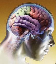 Alimentos para un cerebro sano 1