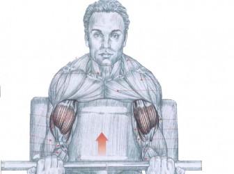 Tips para tu rutina de biceps 1