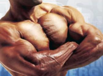 Alimentos para aumentar la masa muscular 1