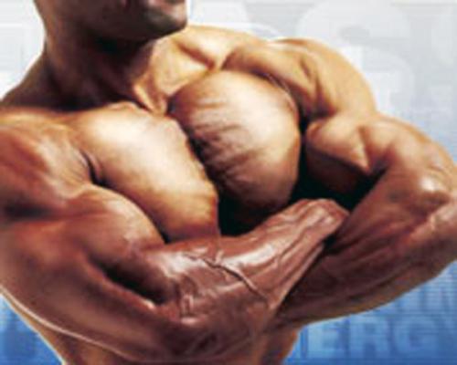 Alimentos para aumentar la masa muscular