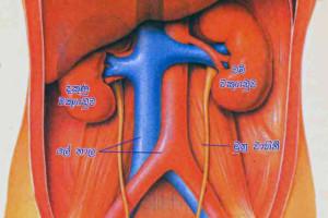 El tabaco y su incidencia en la gastritis 1