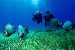 Practicar Submarinismo en Gran Canaria