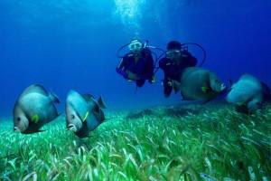 Practicar Submarinismo en Gran Canaria 1