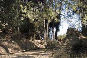 Excursión por el Parque de Collserola , Barcelona 1