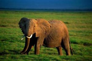 Ecoturismo, safari fotográfico en Kenia 1