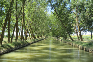 Paseo en barco por el Canal de Castilla 1