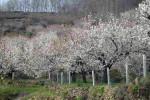 El Valle de Jerte en flor