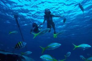 Relax y buceo en Cuba 1