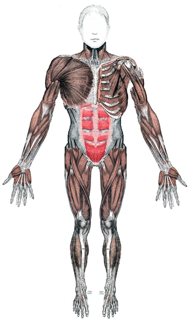 Espasticidad o Rigidez muscular - Punto Fape