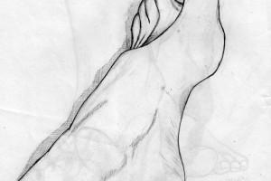 Anatomía funcional del pie  1
