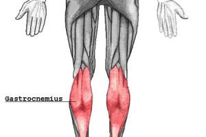 Músculo gastrocnemio (gemelos) 2