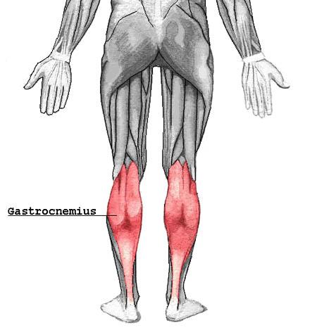 Músculo gastrocnemio (gemelos)