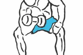 Mejora tus bíceps: curl concentrado
