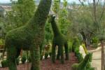 Un bosque encantado cerca de Madrid  2