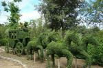 Un bosque encantado cerca de Madrid  5