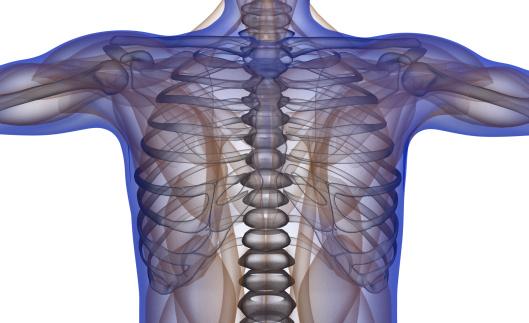 Anatomía y plastinación