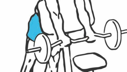 Contruye brazos XXL: Curl scott