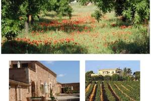 Turismo rural recorriendo Mallorca 1