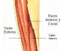 Tendinitis rotuliana y  cuadricipital 1