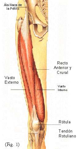 Tendinitis rotuliana y cuadricipital - Punto Fape