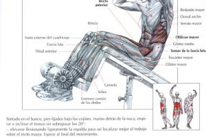 Abdominales de vértigo: la guía definitiva II 1