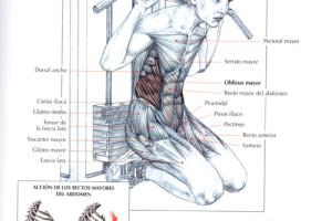Abdominales de vértigo: la guia definitiva III 1