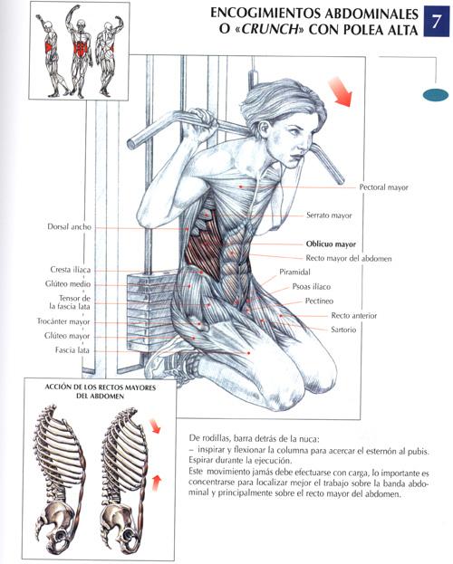 Abdominales de vértigo: la guia definitiva III