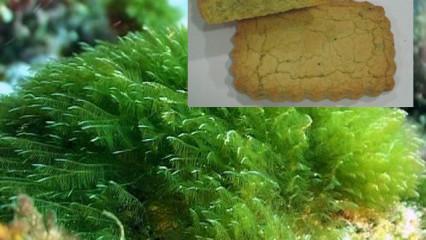 Nuevos alimentos con microalgas