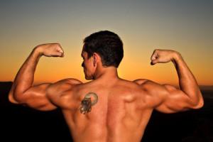 Anatomía: el tríceps braquial 1
