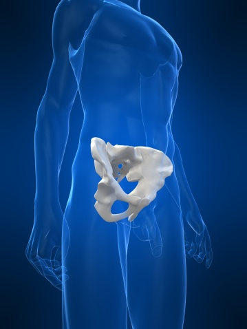 Anatomía: la cadera