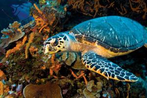 Los mejores arrecifes para bucear en México